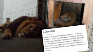 Łódzkie zoo oczami byłego pracownika: alkohol, niewyszkoleni pracownicy, wystraszone zwierzęta