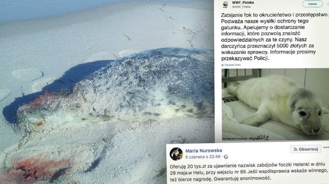 Pięć martwych fok na polskim wybrzeżu. <br />Kolejne nagrody za wskazanie sprawców